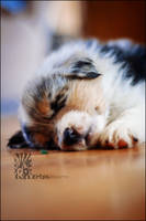 Snoozer by XetsaPhoto