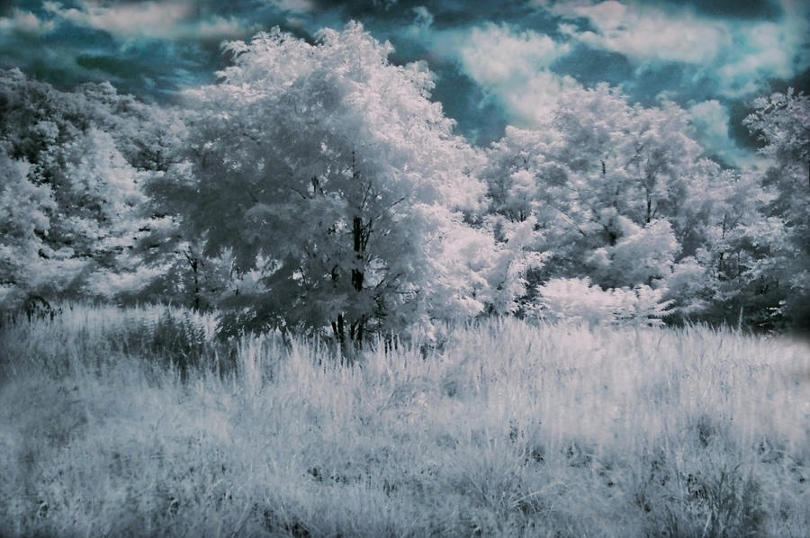 Infrared by Avenley-Brianne