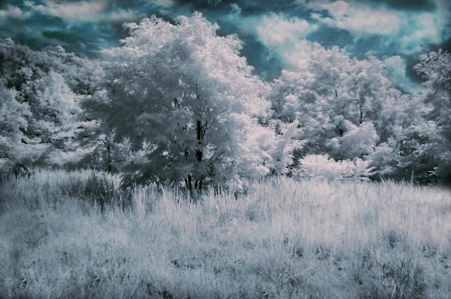 Infrared by Avenley-Brianne