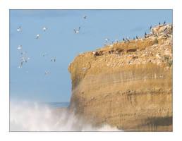 L ile aux oiseaux