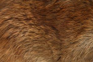 Rat hair 2 by NickiStock