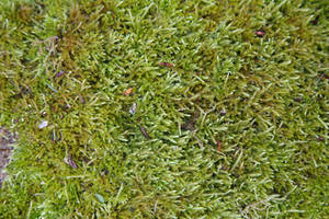 Moss Texture by NickiStock