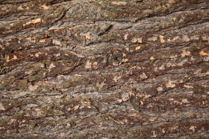 Wood Texture2 by NickiStock