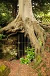 Under Root