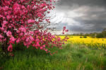 Floral Background Stock