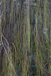 Tree Branch Texture