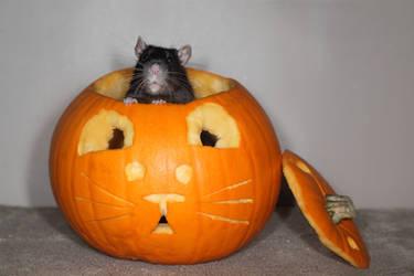 Pumpkin Stock 2 - Blossom by NickiStock