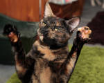 Paws up! Cat Stock