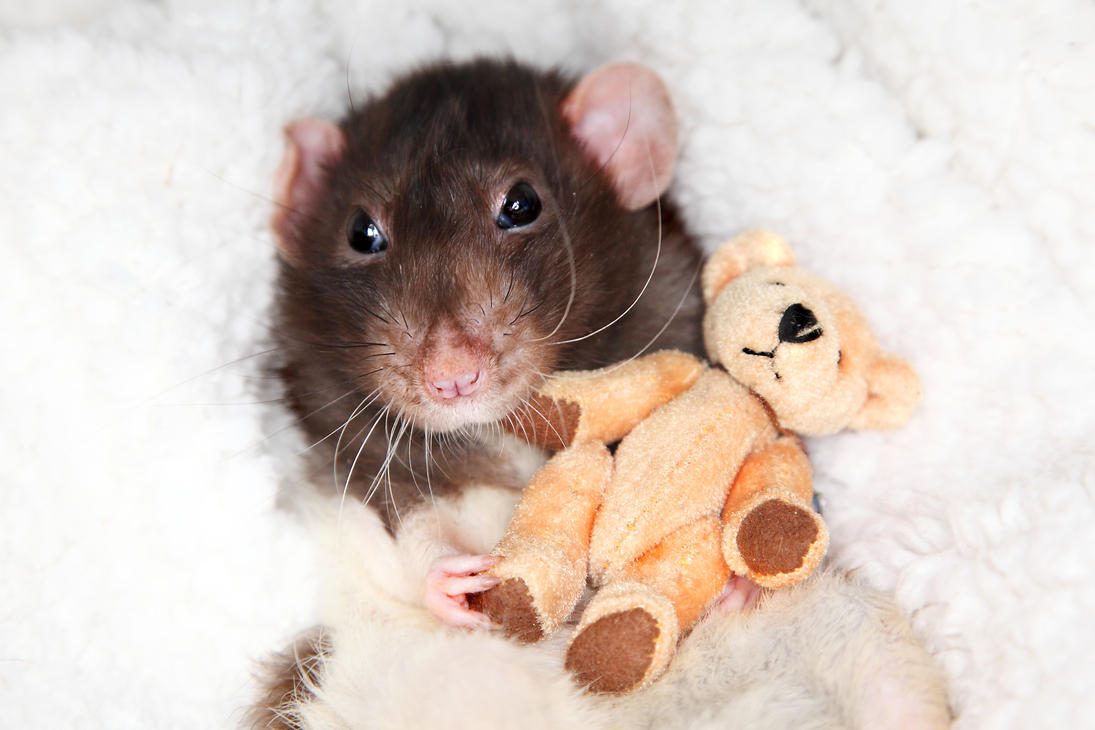 Jeffrey and his Teddy - stock image by NickiStock