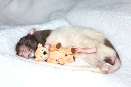 Jeffrey and his Teddy 2 - stock image