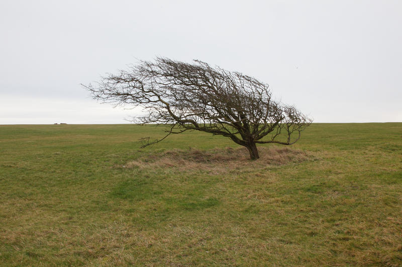 Windswept Tree Stock by NickiStock