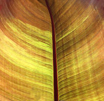 Leaf Texture Stock by NickiStock