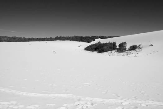 tangalooma sand dunes 03