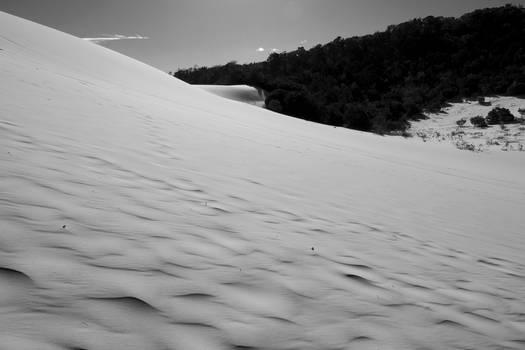 tangalooma sand dunes 04 bw