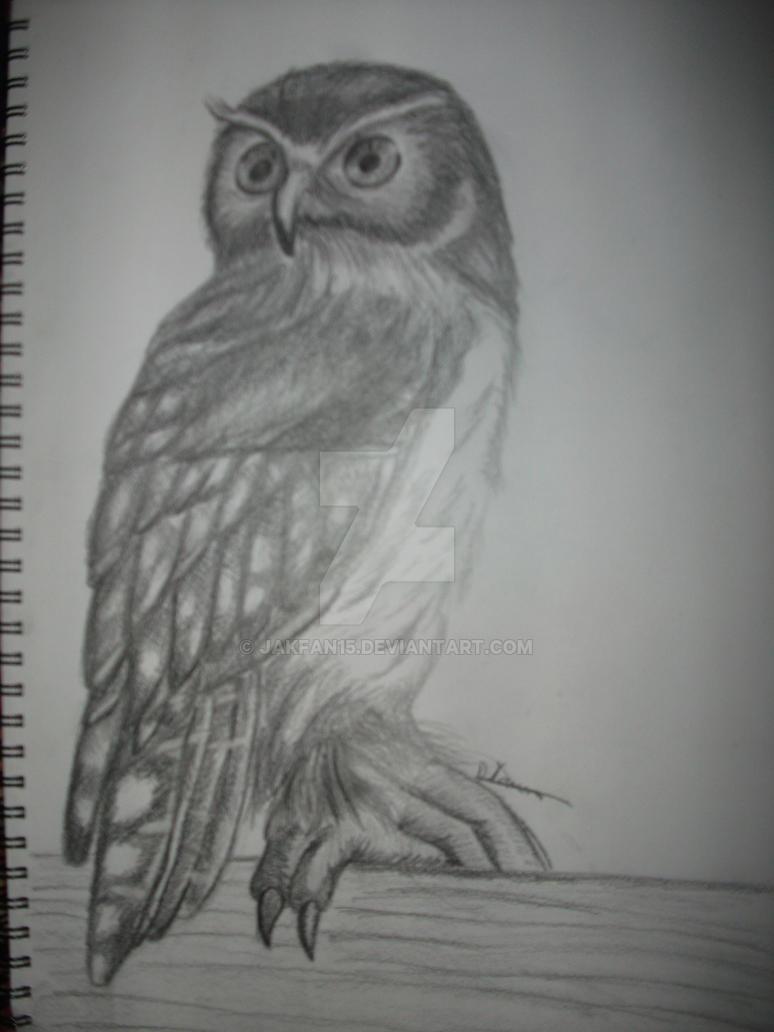 Australian Barking Owl by Jakfan15