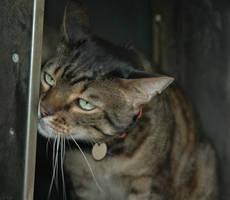 Cat by kingtristan