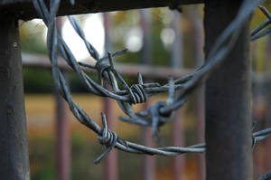 Fence by kingtristan