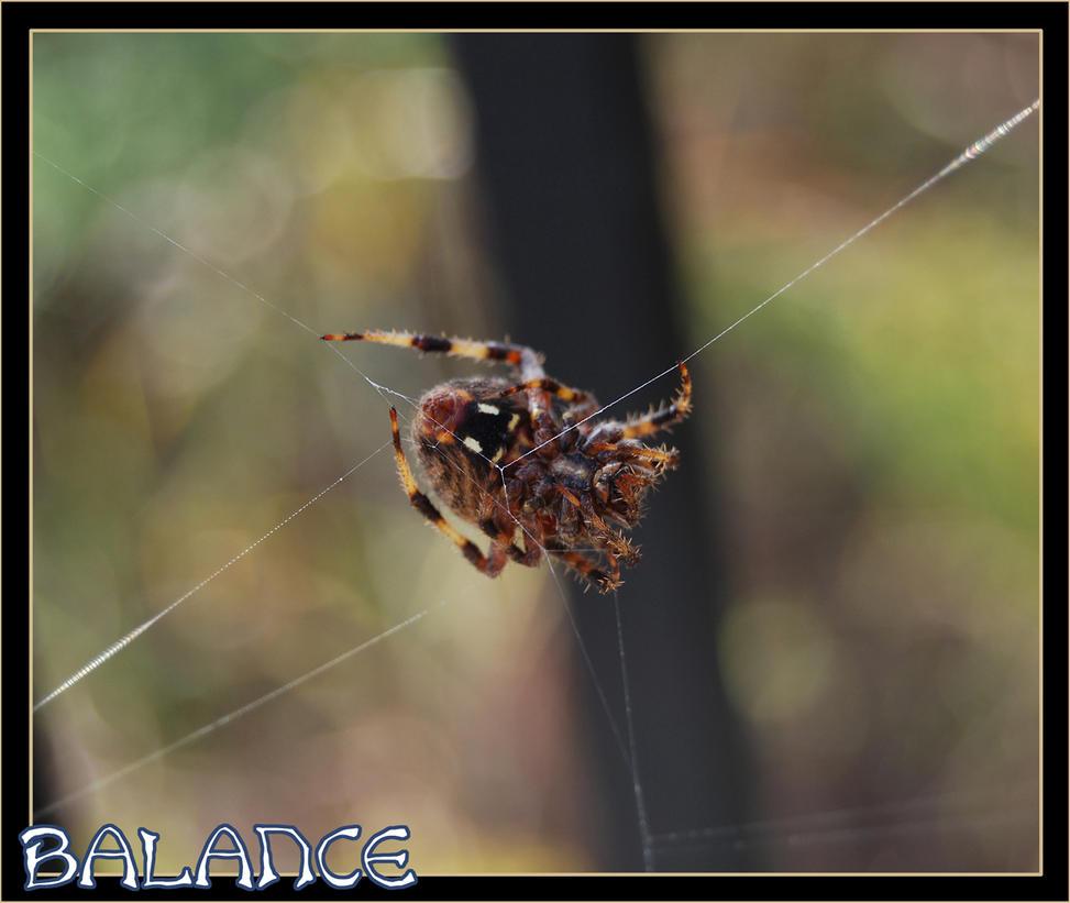 BALANCE by Snigom