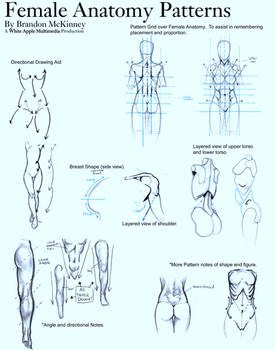 Female Anatomy Patterns