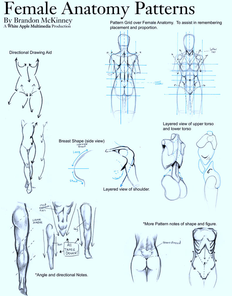 Female Anatomy Patterns by Snigom on DeviantArt