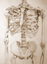 skeleton by OneBadFishie