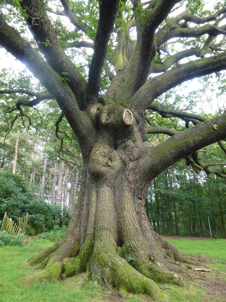 <b>Tree Trunk</b> In Woodland Stock Photos - Image: 34857783