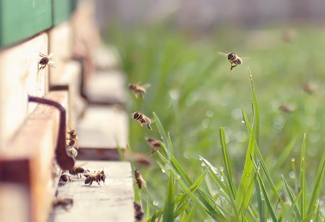 Bee work by Luisa-Puschelova-7