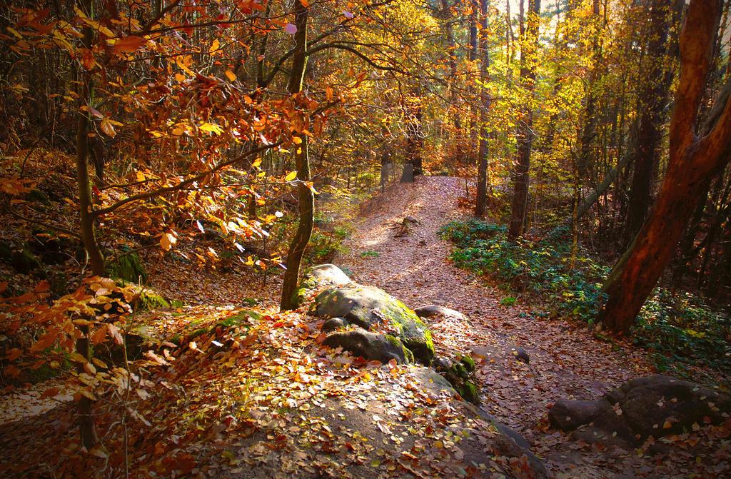 November in Czech Paradise II. by Luisa-Puschelova-7