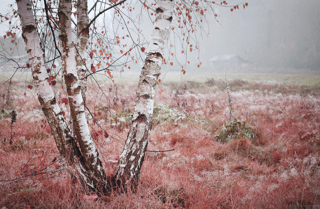 Odor dew of autumn meadow by Luisa-Puschelova-7