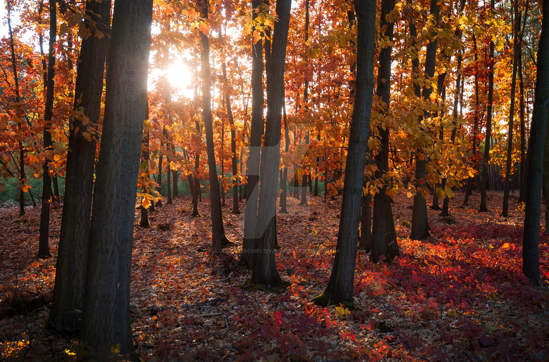 The fiery sunset in the forest by Luisa-Puschelova-7