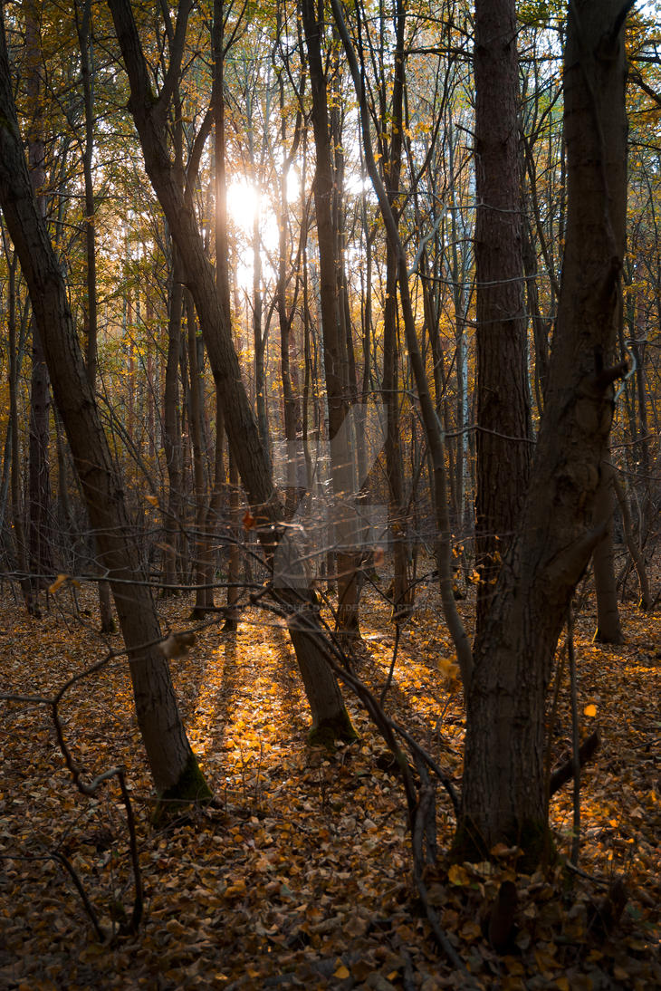 Silence of the forest by Luisa-Puschelova-7