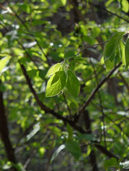 Spring green II