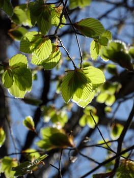 Spring green III
