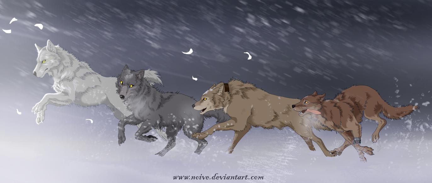 Wolfs Rain by Noive
