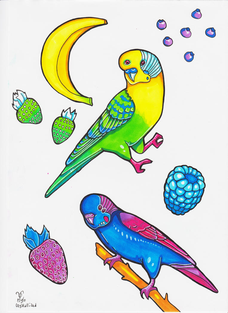 rainbow budgies by PsyloCrystallized