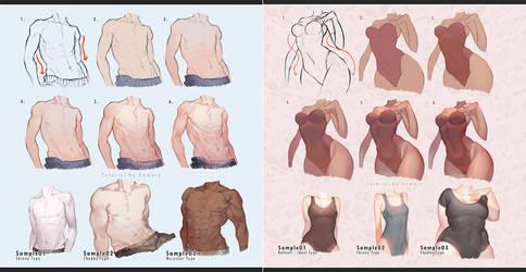 Male vs Female Body