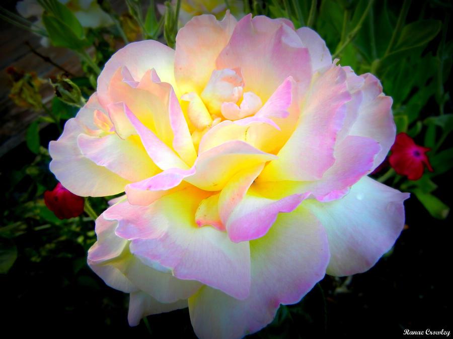 Single white rose by ranae490 on deviantart single white rose by ranae490 mightylinksfo
