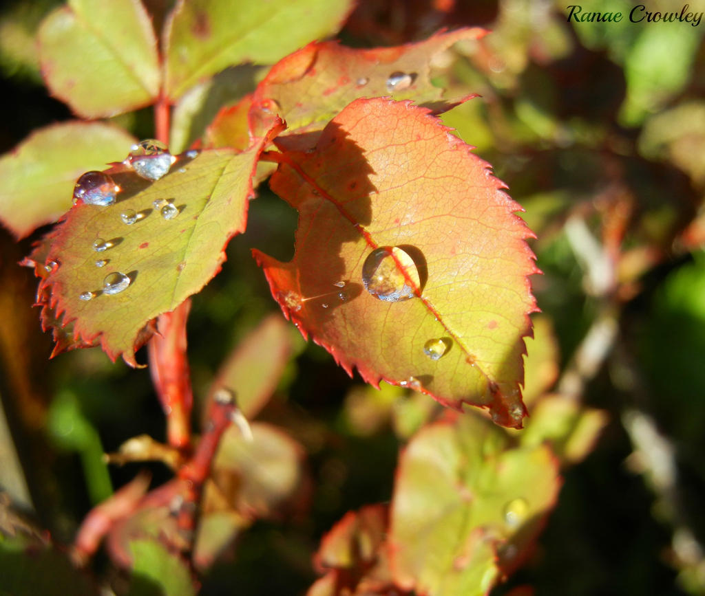 Droplets in the sunshine by Ranae490