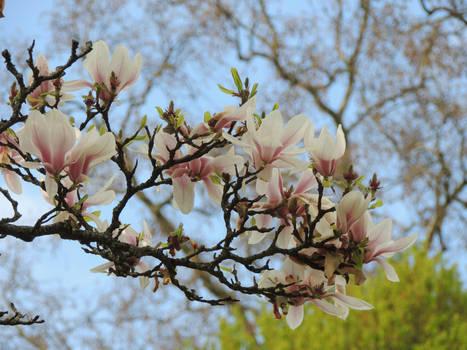 Springtime again