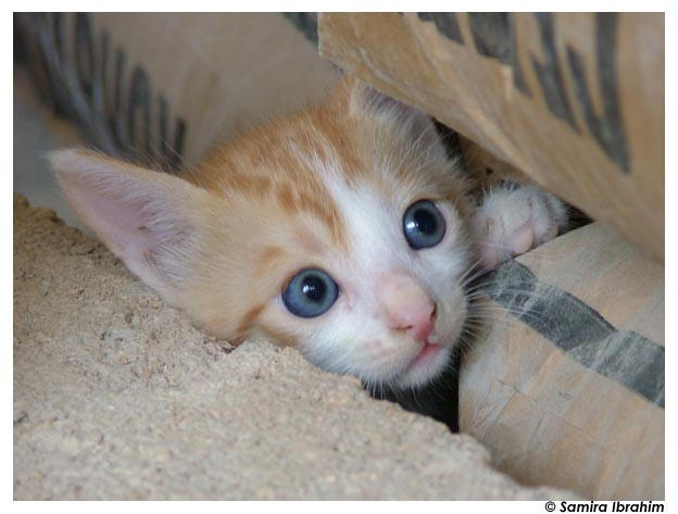 kitten by samikool