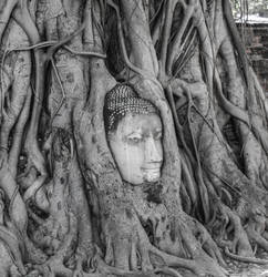 Buddha in the tree