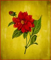 scarlet by esraart