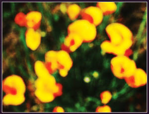 Poppies in Abstract