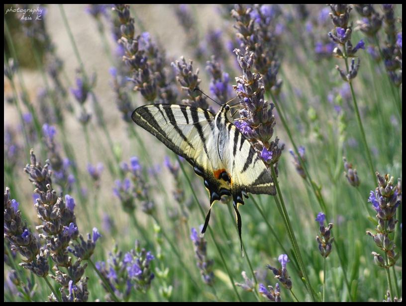 butterfly. by usmiechnijsie