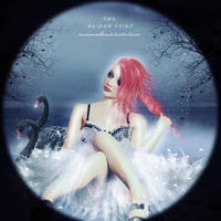 The Black Swan by mariaig