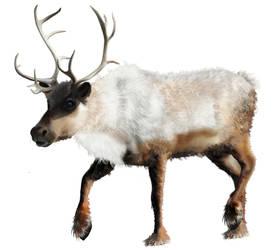 Vector reindeer by MonikaZagrobelna