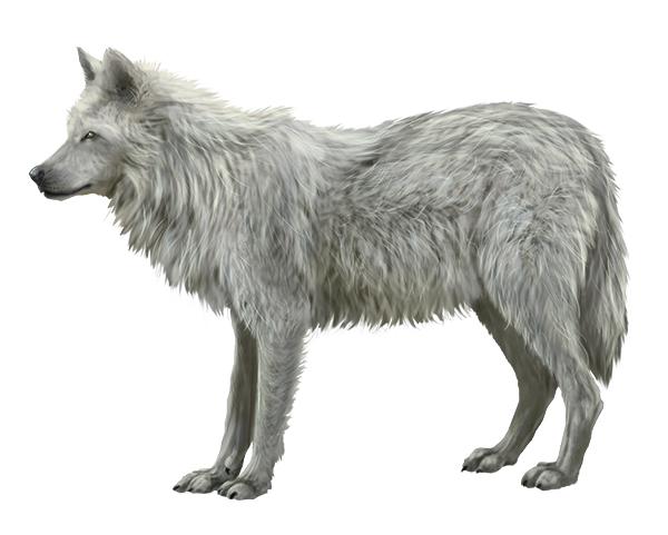 Fur tutorial by LadyAway