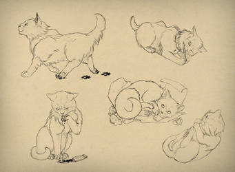 How to draw cats by MonikaZagrobelna