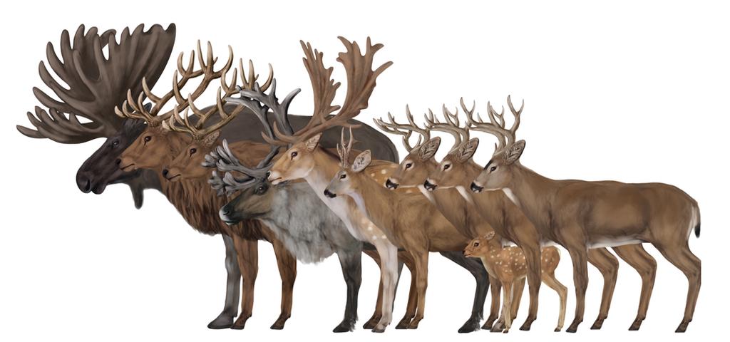 how to draw deers by monikazagrobelna