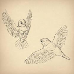 How to draw birds by MonikaZagrobelna